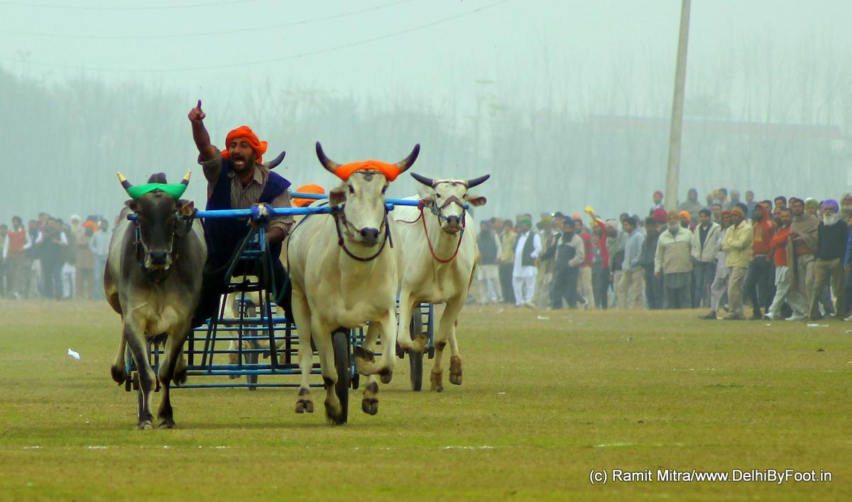 Kila Raipur Sports Fest