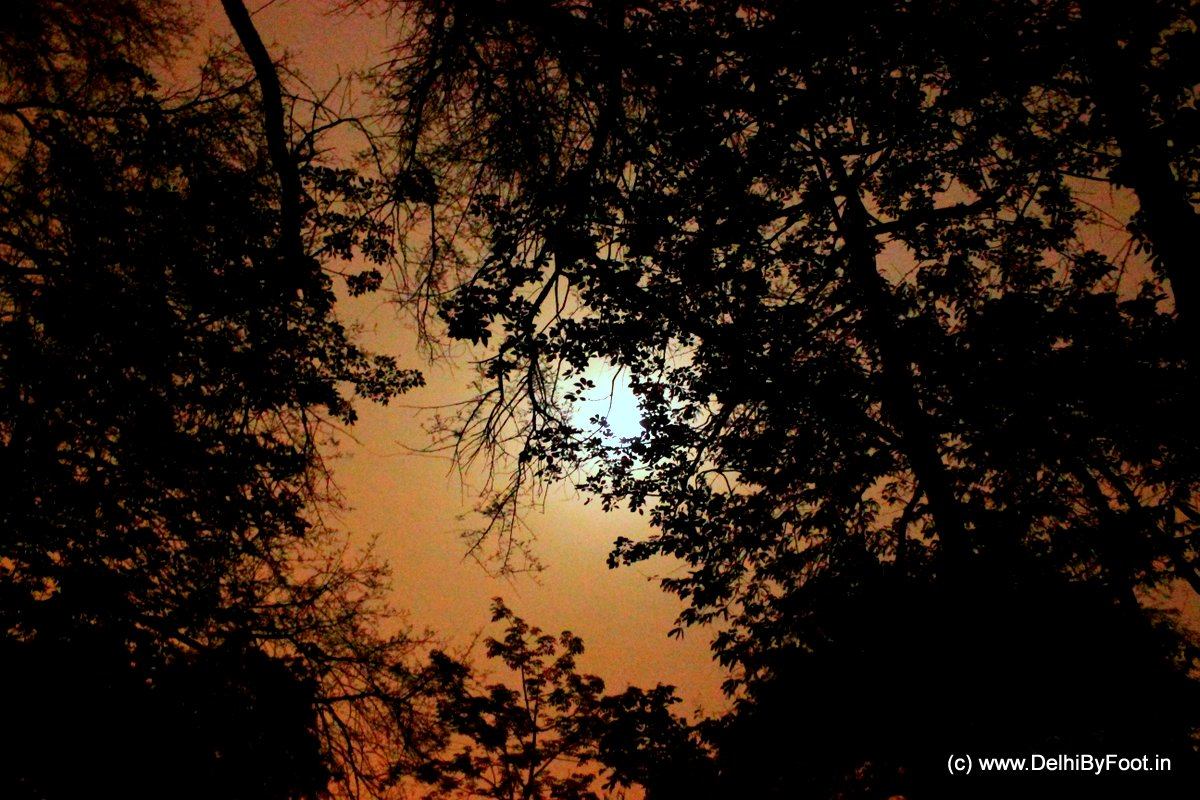 An evening with the Ghosts of Mehrauli, Delhi