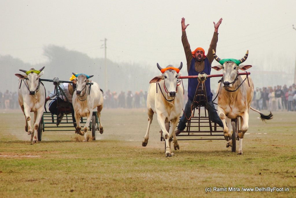 Kila Raipur: Of Bullock-Cart Races, Village Games and Punjab Da Flavour